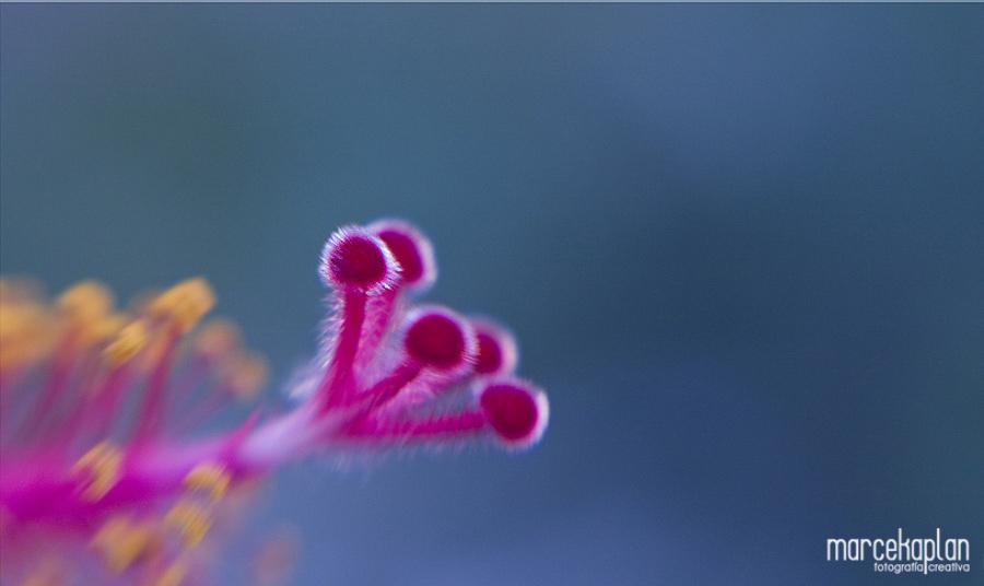 Foto de Hibisco - Flores y macros - Marce Kaplan | Fotografía Creativa