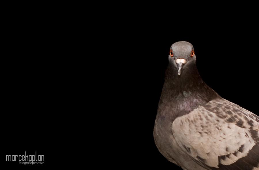 Fotos de palomas - Fotógrafo profesional Marce Kaplan | Fotografía Creativa